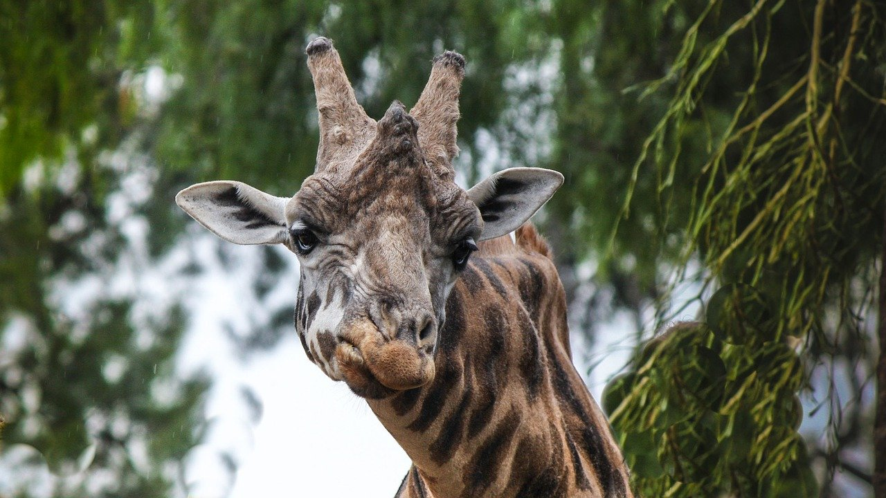 Top 10 Animals That Drink And Do Drugs In the Wild