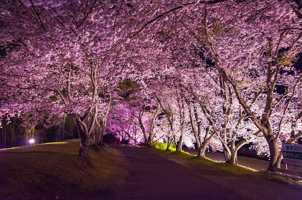 Top 10 Best Cities To Visit When in Wondrous Japan