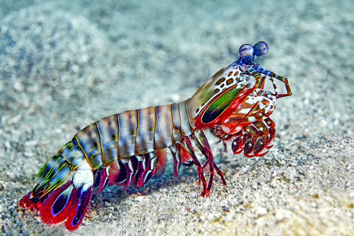 Top 10 Most Peculiar Earth Creatures That You Won't Believe Exist